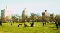 That is the question! I happen to think that off-leash hour at Prospect Park, especially on weekends, is one of the greatest things about Park Slope. Many a weekend morning, […]