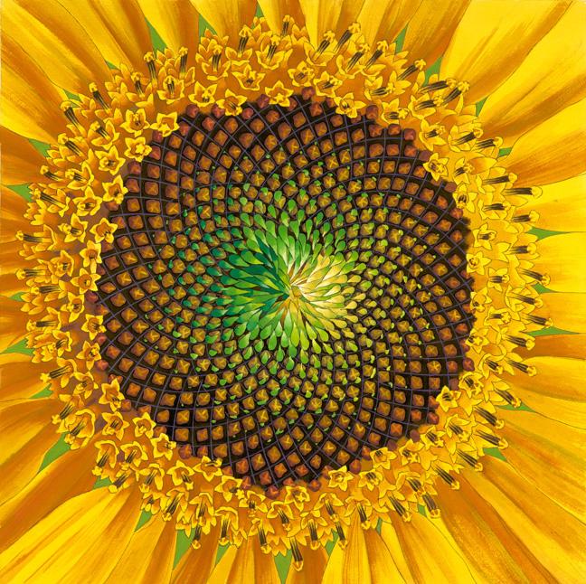 SunFlower_scan, 4/24/70, 2:20 AM, 8C, 7850x7970 (149+1250), 100%, Default Settin, 1/12 s, R79.0, G35.1, B47.3